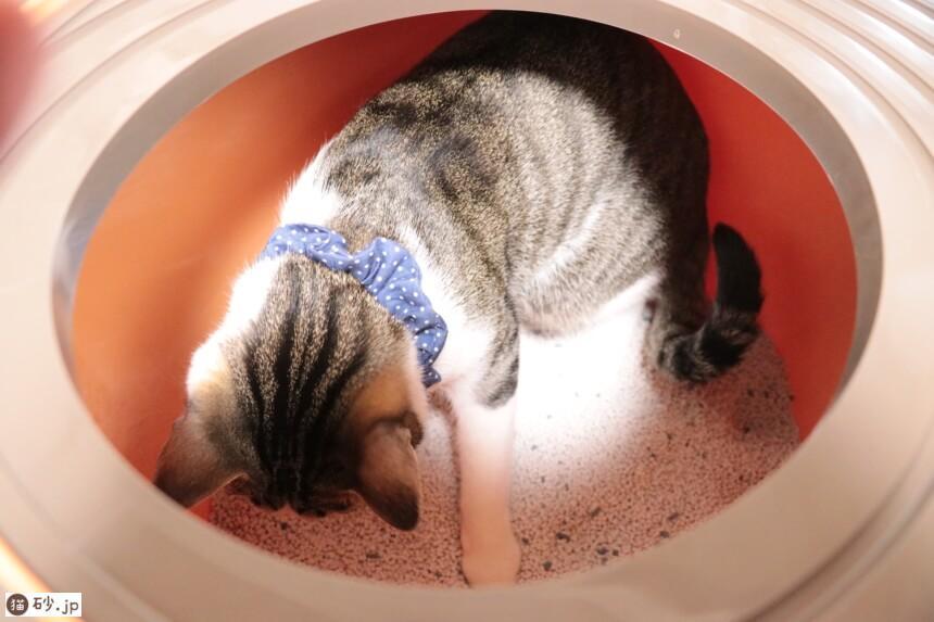上から猫トイレで上から猫トイレ用猫砂を使ってみた